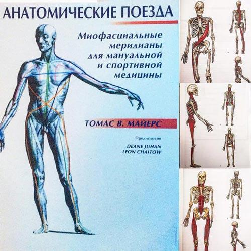 Миофасциальные меридианы
